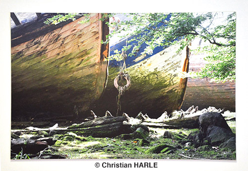 HARLE-Christa-2013